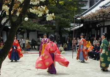 黄桜と蹴鞠(四月十四日)